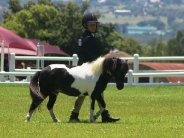 <small><b>Reserve Junior Champion Mare</b><br>