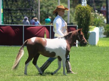 <small><b>Reserve Champion Gelding</b><br>