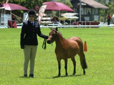 <small><b>Reserve Senior Champion Mare</b><br>