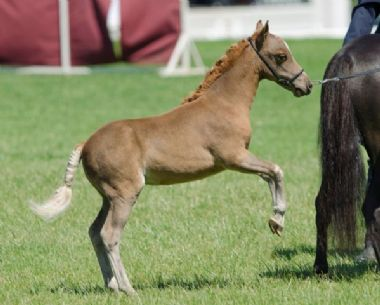 <small><b>Reserve Grand Champion Mare<br>