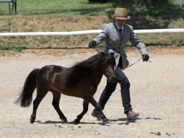 <small><b>Reserve Senior Champion Miniature Horse<br>