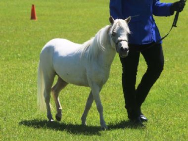 <small><b>Junior Champion Mare</b><br>