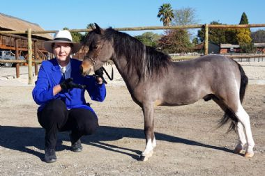 <b>Reserve Junior Champion Stallion</b><br>
