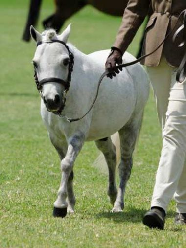 <small><b>Champion Gelding</b><br>